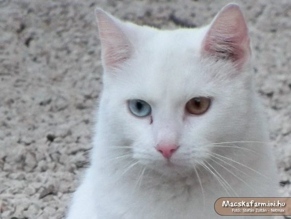 White boy Cat - photo by sbs